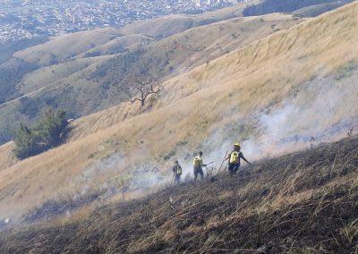 Incêndios florestais caem pela metade em Nova Iguaçu